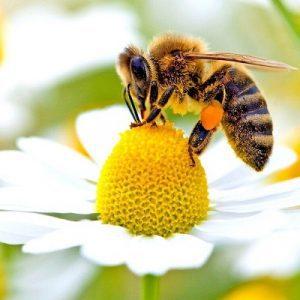 سوالات پرورش زنبور عسل رایگان
